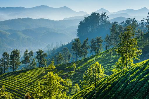 istock Green tea plantations. Munnar, Kerala, India 670688480