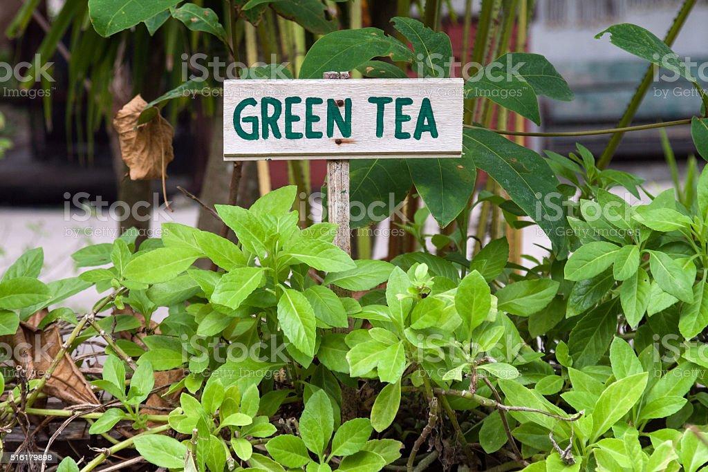 Green tea sign stock photo
