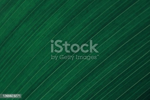 Green Teal Leaf Dark Striped Natural Texture Foliate Pattern Vein Aspidistra Macro Photography Copy Space Background for presentation, flyer, card, poster, brochure, banner Soft Selective Focus