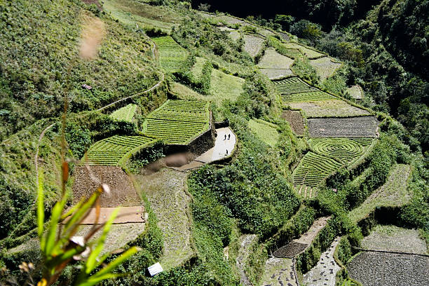 green terraced fields luzon philippines - baguio city stock photos and pictures