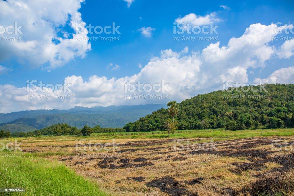 Green Terraced Rice Field at Ban Pa Bong Peay stock photo