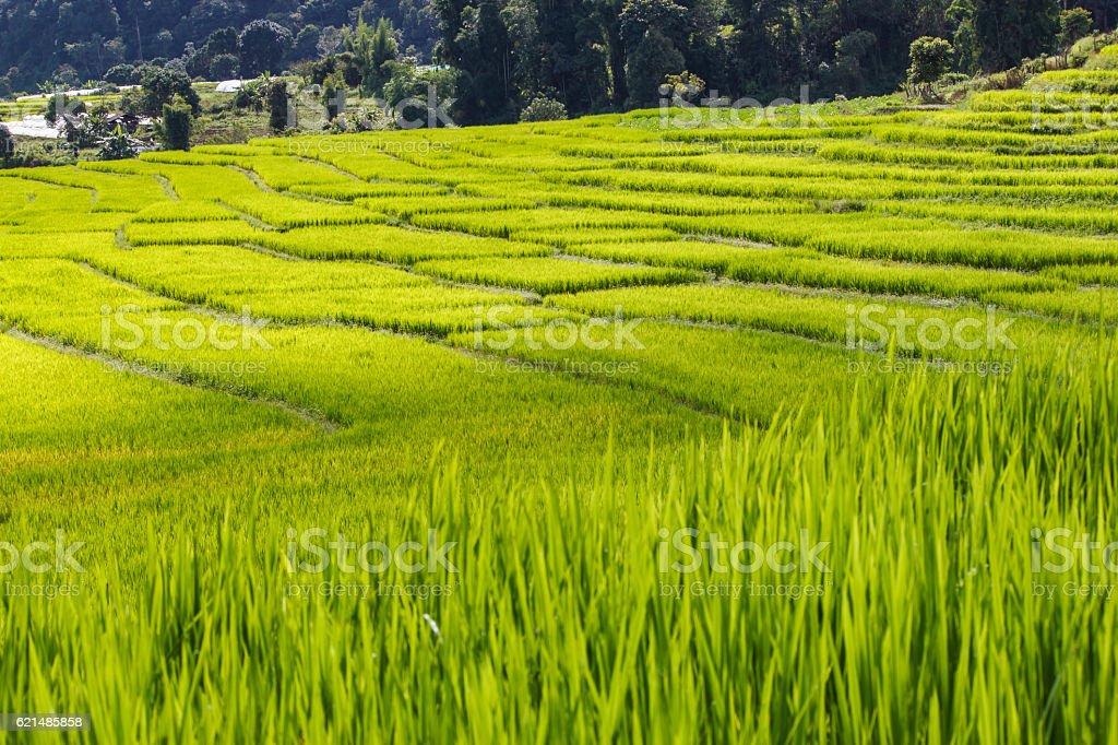 Verde campo di riso terrazzati di Mae Klang Luang  foto stock royalty-free