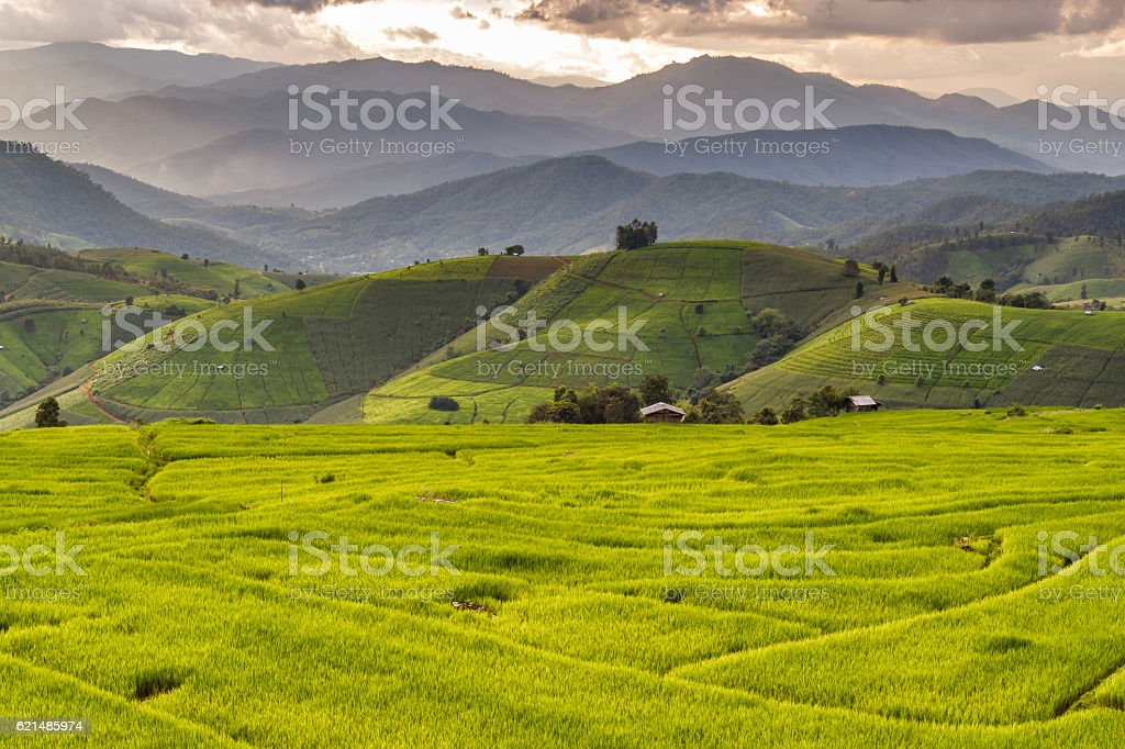 Grüne Reisfeld auf der Terrass'in Pa Pong Pieng  Lizenzfreies stock-foto