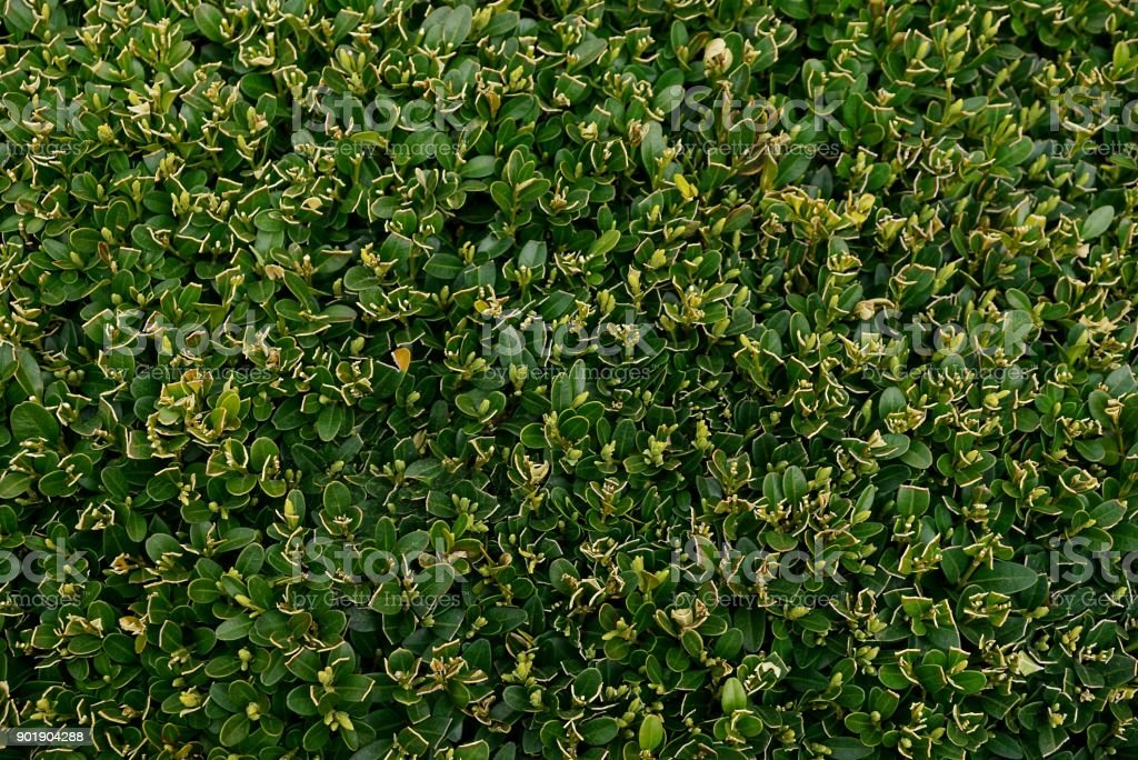 Green texture of small plants in the garden stock photo