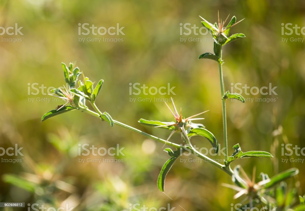 Green thorny plant in a park stock photo