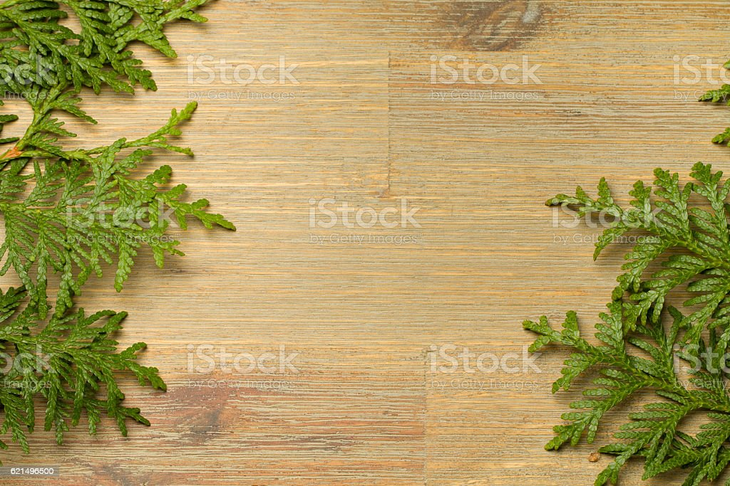 Green thuja on the brown wooden table with empty copyspace photo libre de droits