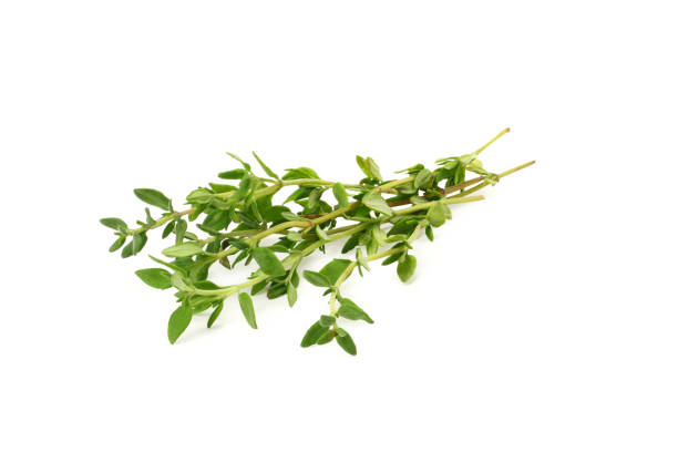 green thyme bunch isolated on white background green thyme bunch isolated on white background thyme photos stock pictures, royalty-free photos & images