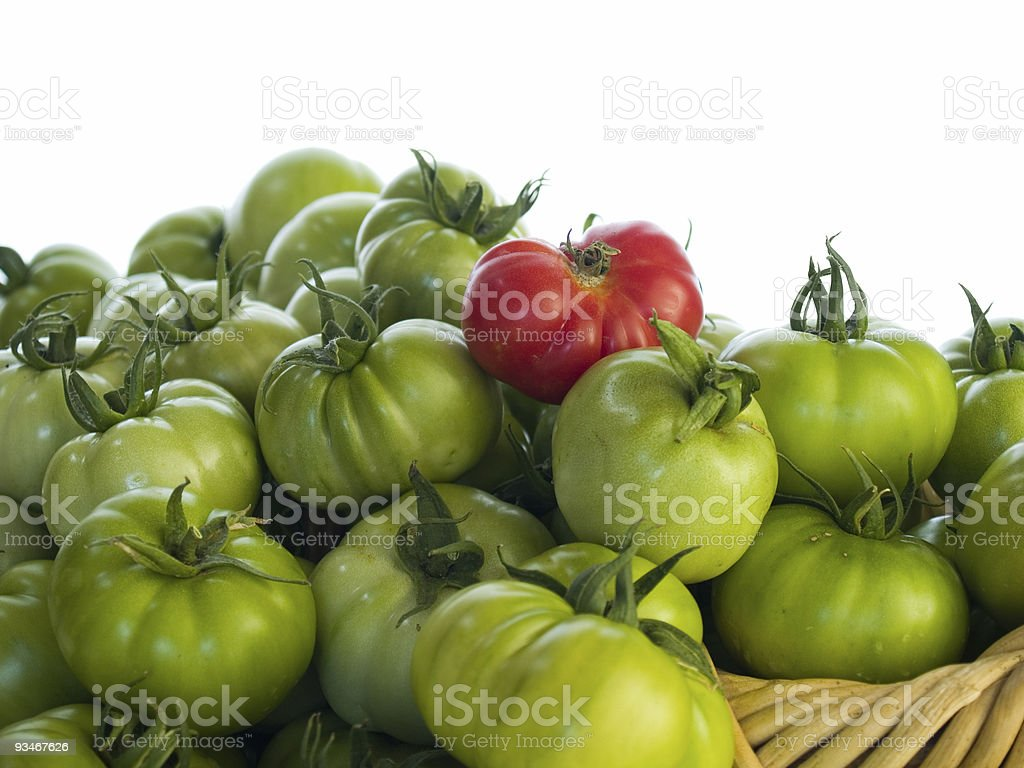 Green tomatoes and one red royalty-free stock photo
