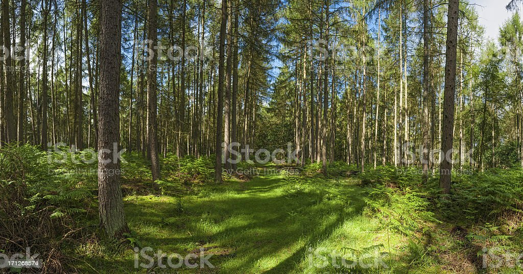 Green trail through idyllic summer forest panorama royalty-free stock photo