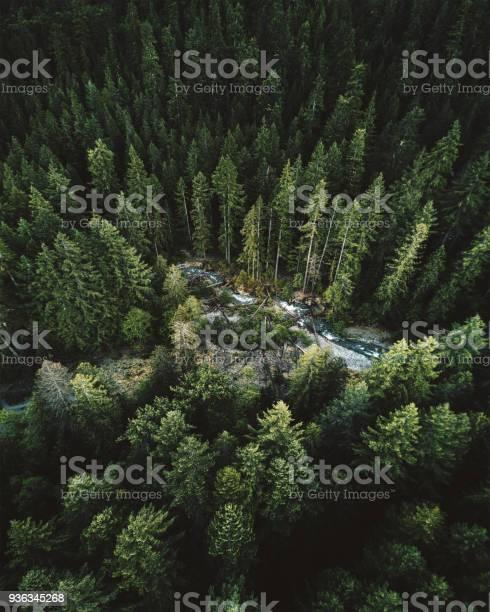 Green tree aerial view in washington state picture id936345268?b=1&k=6&m=936345268&s=612x612&h=1f6ulb2mhtcs oz8rz3 uazk6epgzlyasw shxxxmxg=