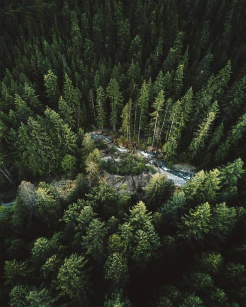 워싱턴 주에서 그린 트리 공중 보기 - mountain top 뉴스 사진 이미지