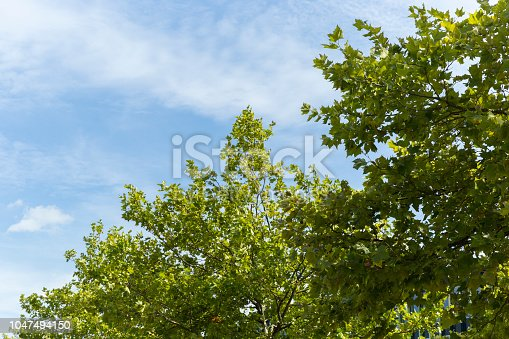Green tree against deep blue sky providing perfect space for text and copy space.