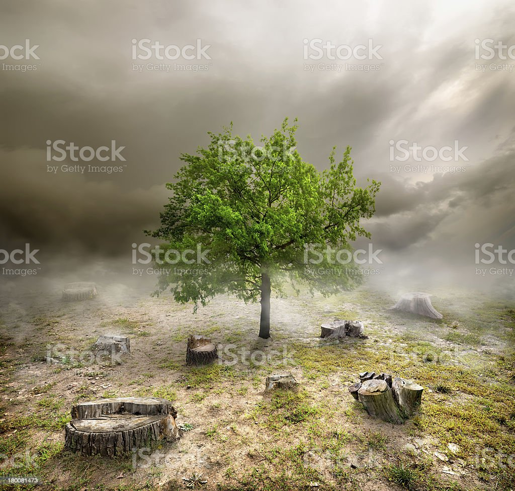 Green tree among the stumps stock photo