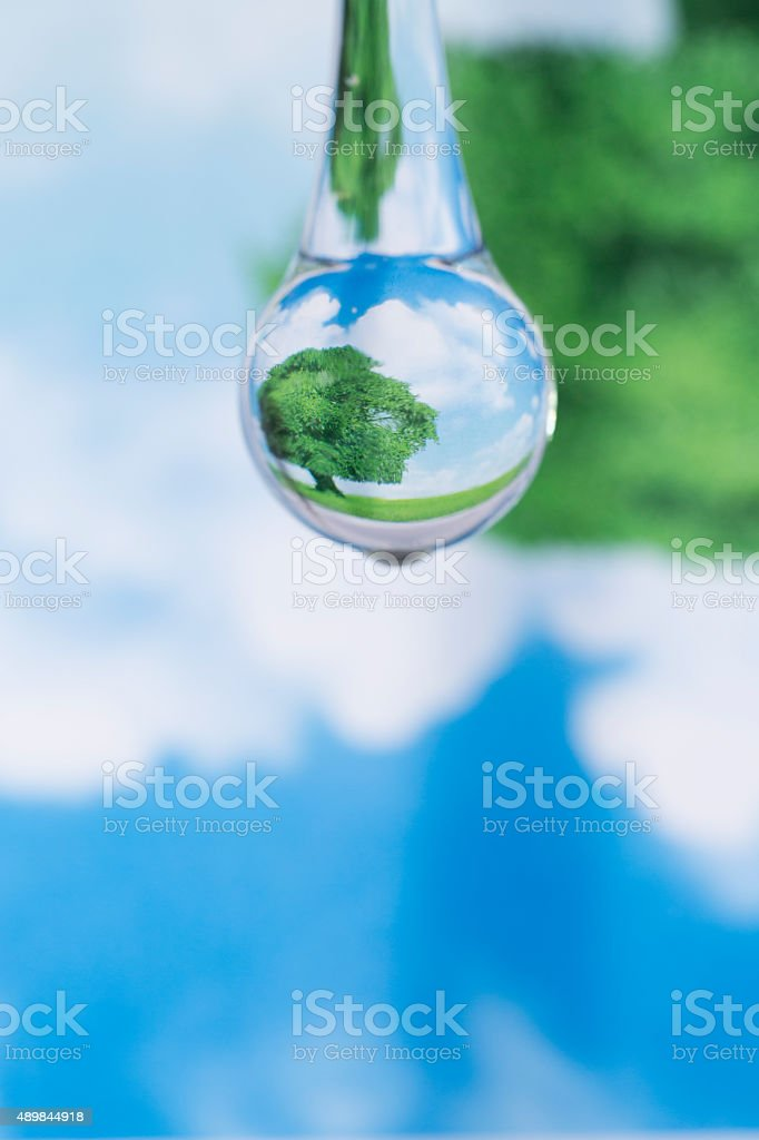 Green tree and blue sky reflected in  the water drop stock photo