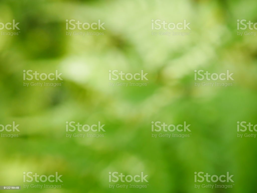 Green tree and sunlight abstract blur background style stock photo