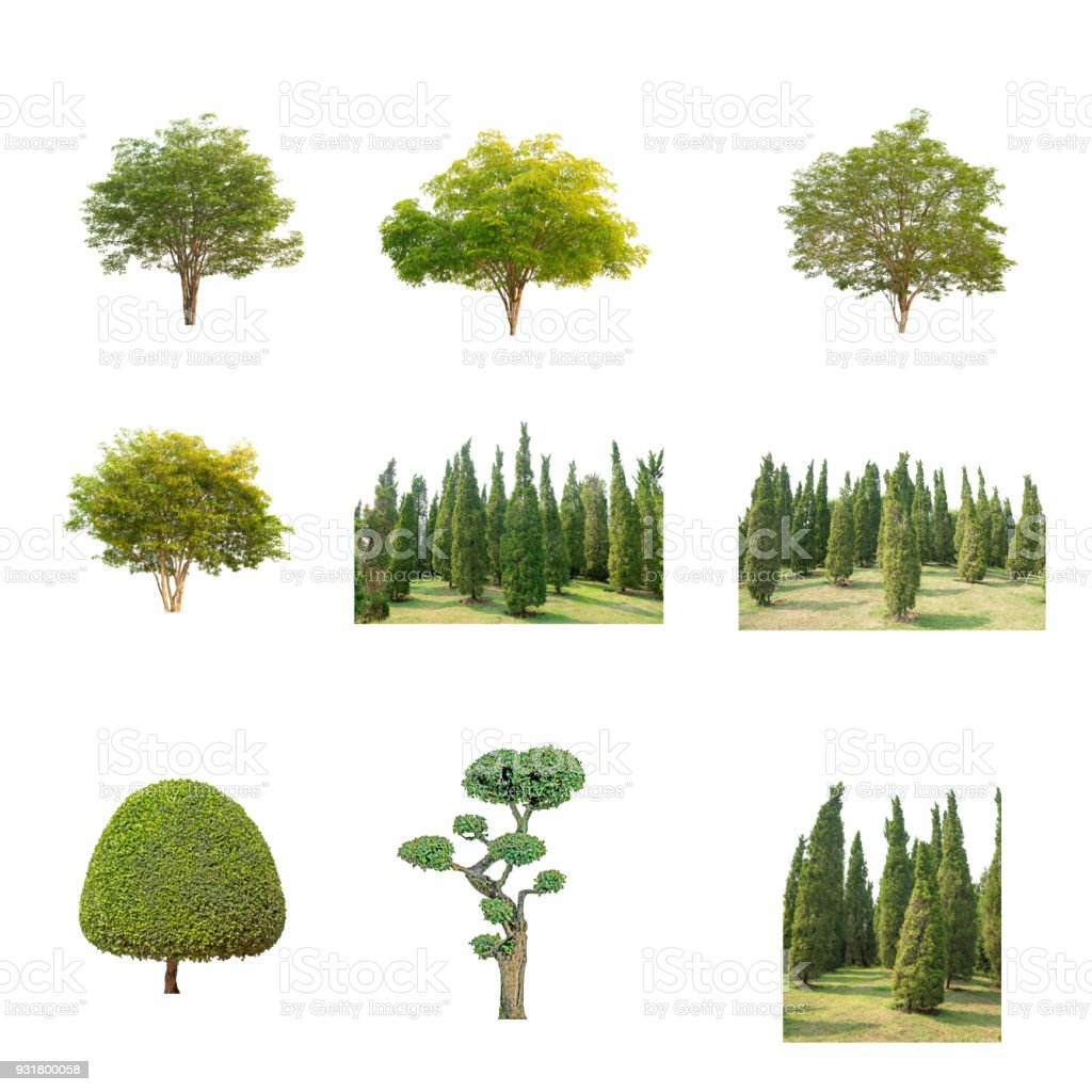 Green Tree at isolated on white background .The collection of trees stock photo