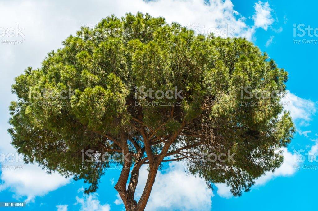 green tree at italy stock photo
