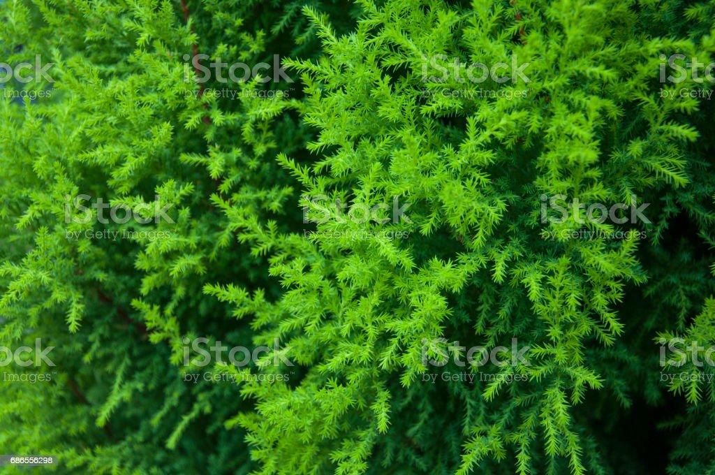 Green tree background royaltyfri bildbanksbilder