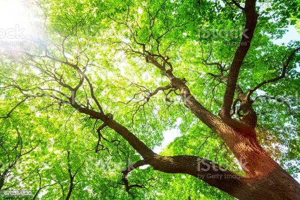 Photo of Green tree canopy in spring day