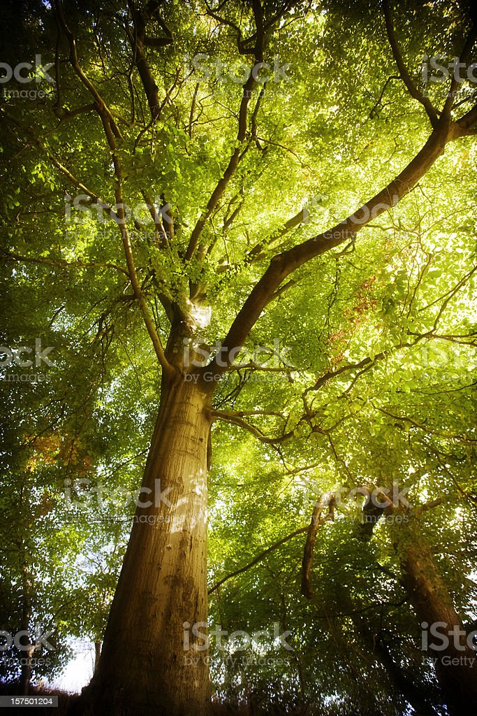 Green tree canopy in the Shidben Valley forest stock photo