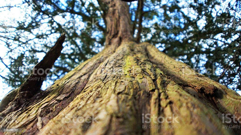 Green tree closeup stock photo
