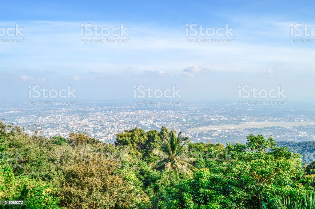 Green tree foreground contrast against city background stock photo