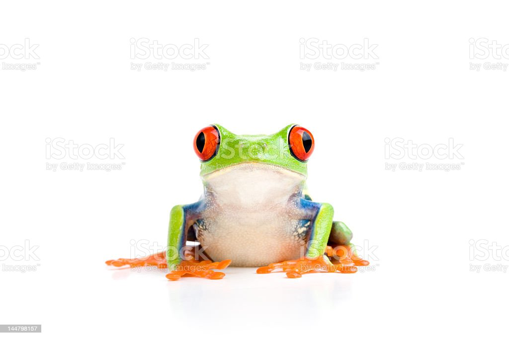Green tree frog with red eyes isolated on white stock photo