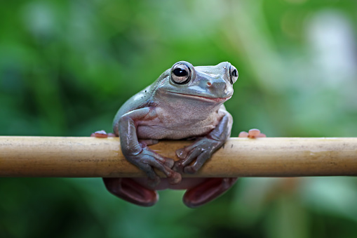 sitting on bamboo branch