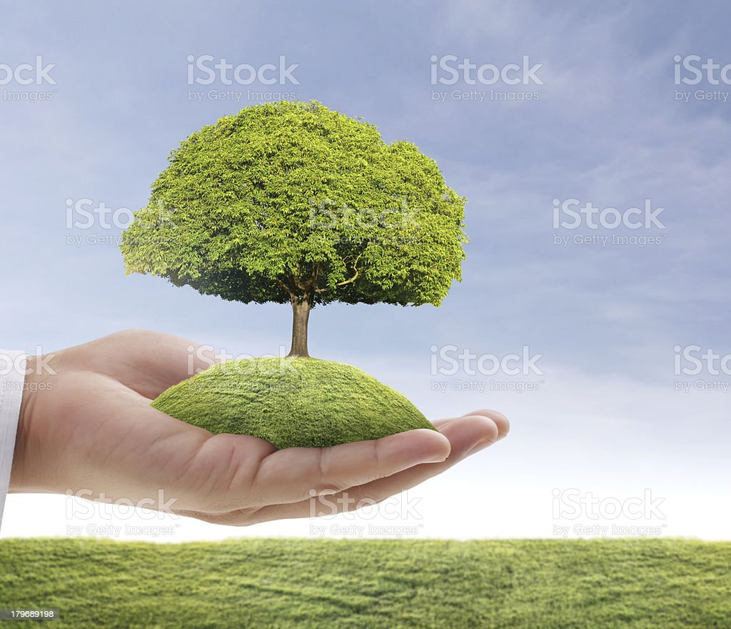 green tree in hand royalty-free stock photo
