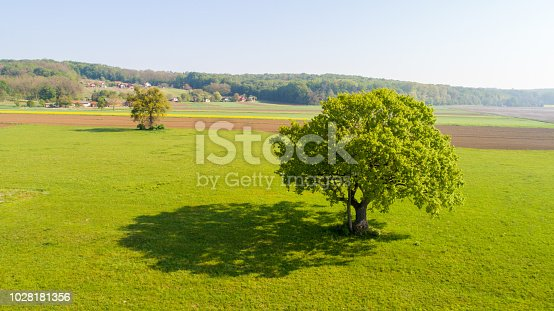 Scenic landscape with a green tree in a meadow under clear sky