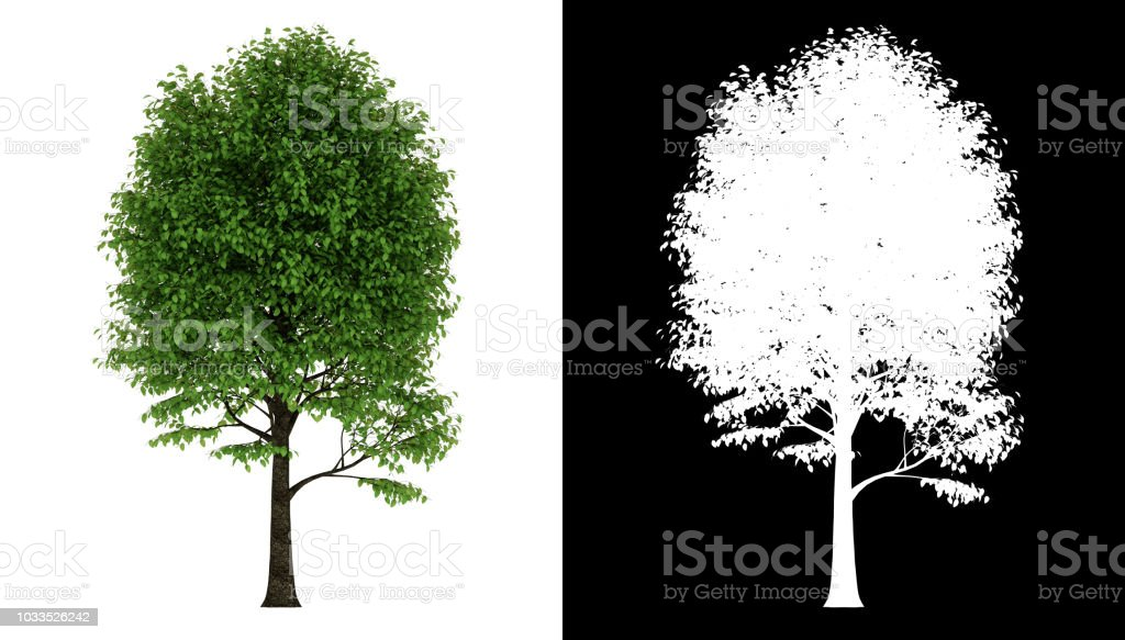 Green Tree In Summer Isolated On Transparent Background Via