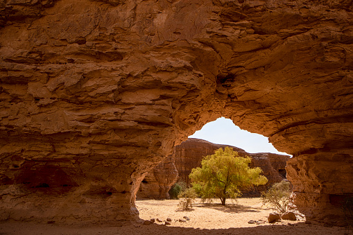 Green tree seen through one of the typical rock arches in the remote Ennedi Mountains (massif) in the Sahara desert, North-East Chad. The Ennedi massif was declared as an UNESCO World Heritage site in 2016.