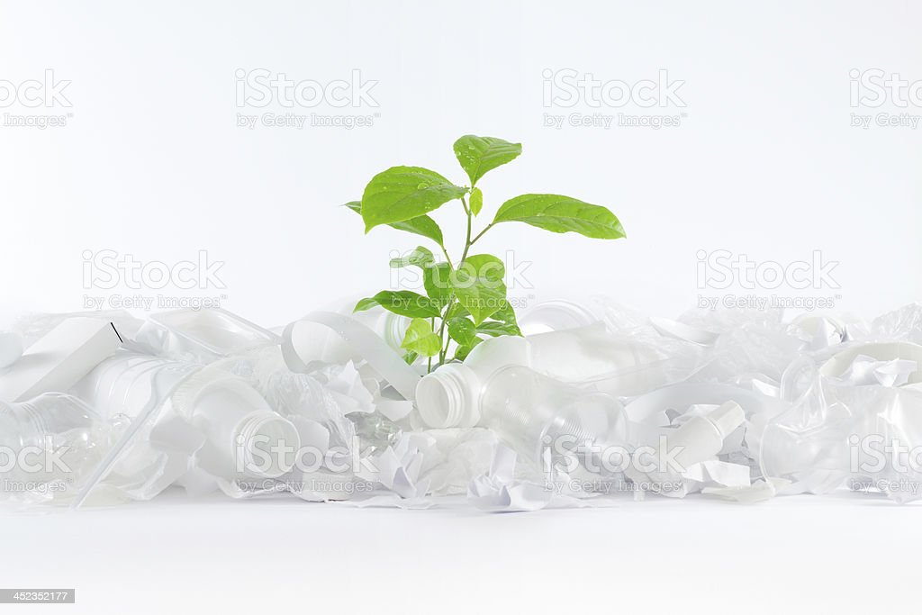 Green tree in white trash royalty-free stock photo