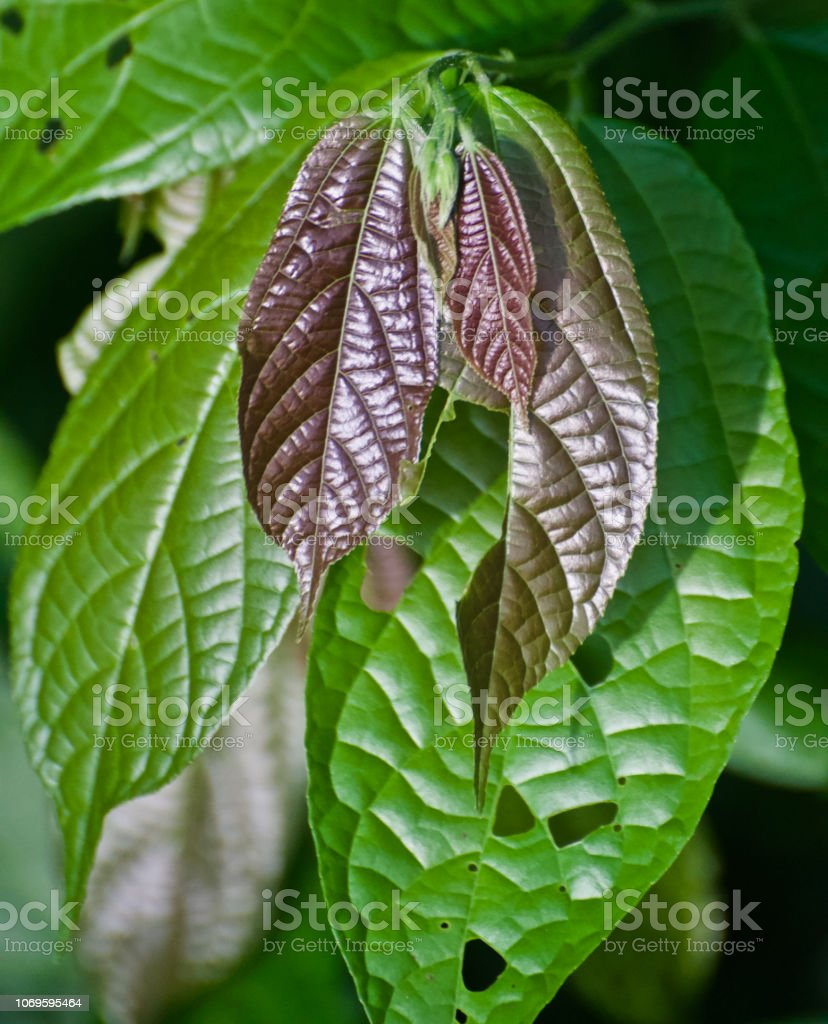 Green Tree Leaves Isolated Unique Photo Stock Photo Download Image Now Istock