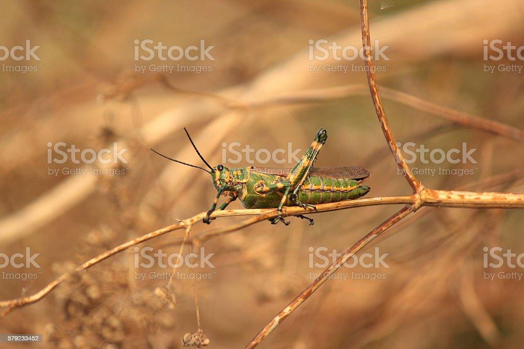 Green Tree lobster stock photo