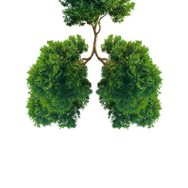 Green tree lungs isolated on white stock photo