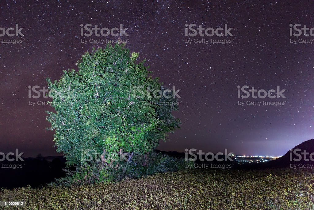Green tree on a hill under night sky with stars.