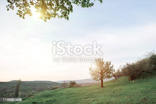 A green tree on a hill with green grass in spring with sunny light. Space for copy space.
