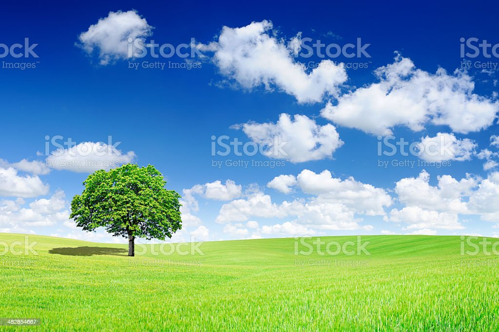 Green tree on spring field royalty-free stock photo