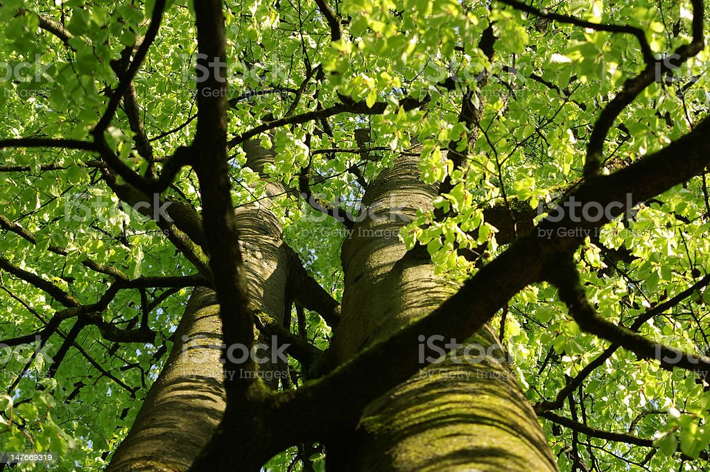 Green tree royalty-free stock photo