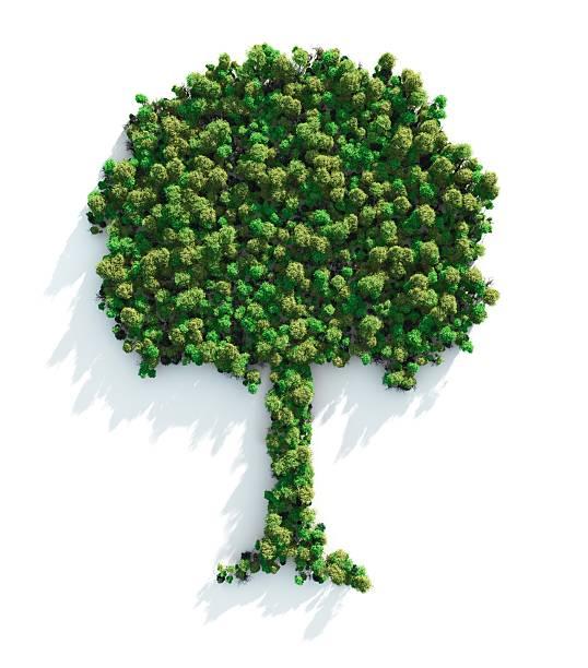 зеленое дерево - лесистая местность стоковые фото и изображения