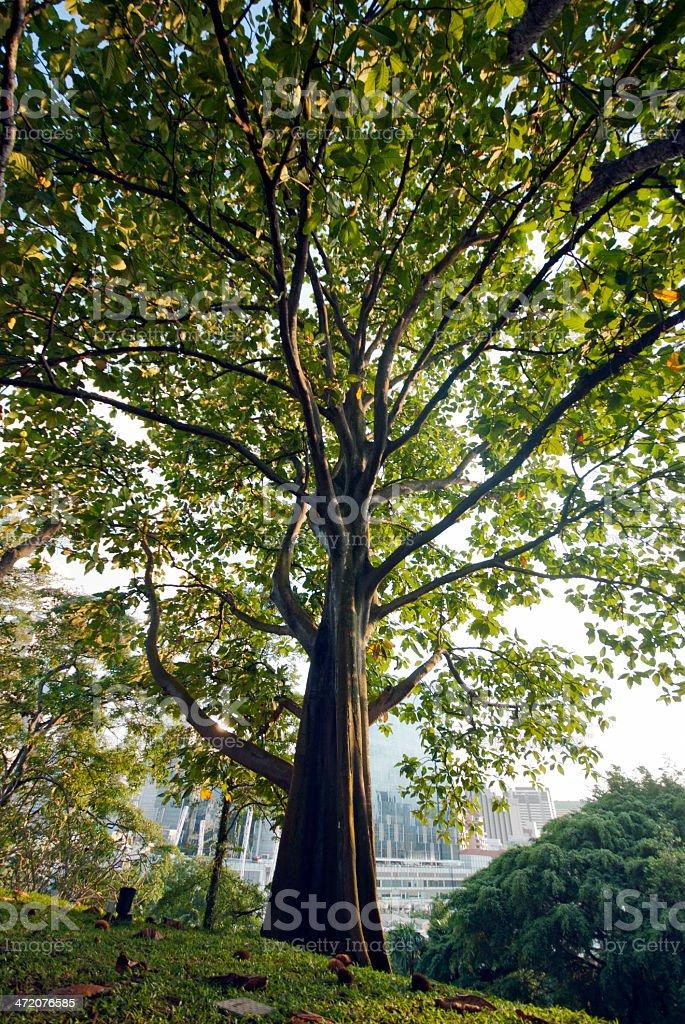 Green Tree – Foto