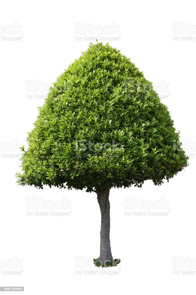Green tree - Стоковые фото Балдахин роялти-фри