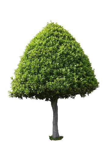 Green Tree — стоковые фотографии и другие картинки Балдахин