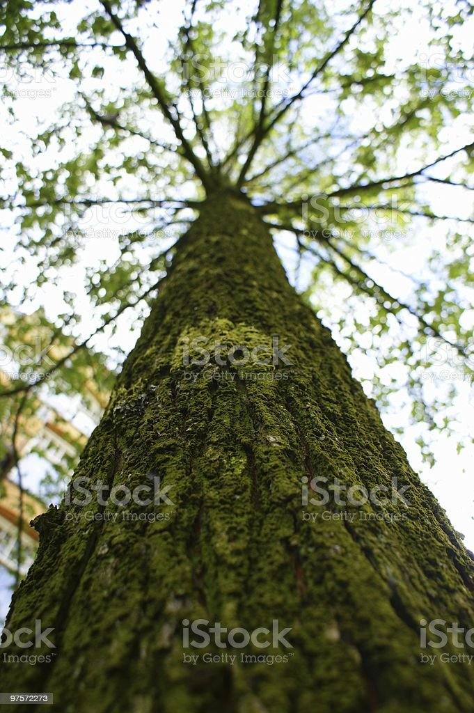 Green Tree photo libre de droits