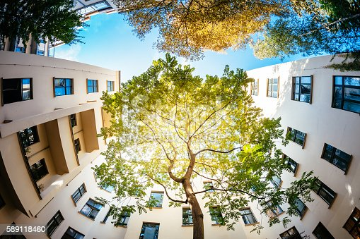 Wide angle shot of a green tree surrounded by residential houses. The sun is shining through the green. Shot from directly below the tree
