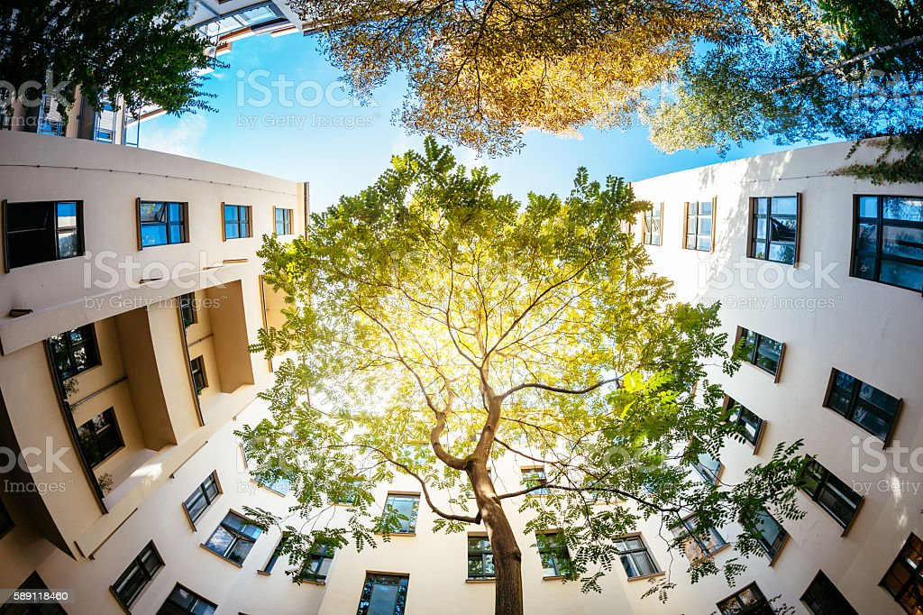 Green Tree Surounded by Residential Houses stock photo