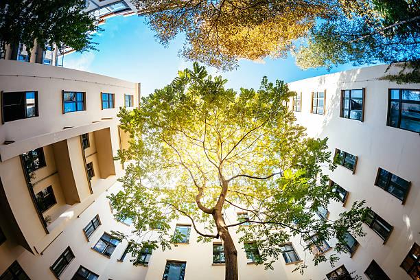 green tree surounded by residential houses - deutsche bäume stock-fotos und bilder