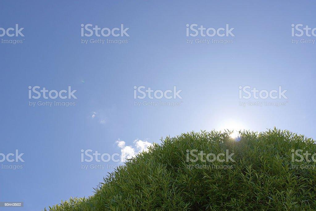 Grünen Baum unter blauen Himmel Lizenzfreies stock-foto