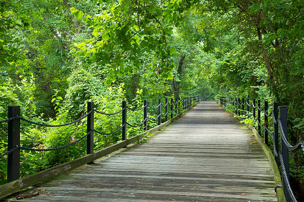Green Trees along Footpath in Washington DC stock photo
